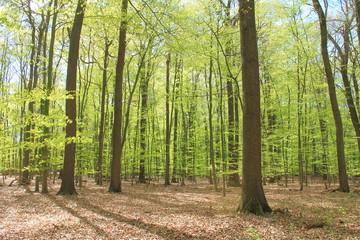 Frisches Grün der Bäume im Frühling