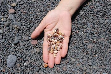Cogiendo caracolas en la playa