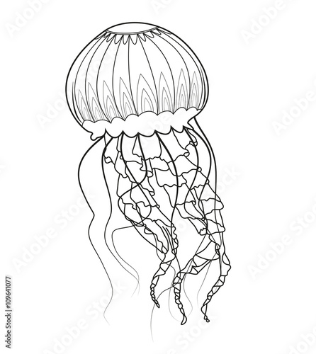 Line Art Jellyfish : Quot black and white jellyfish vector medusa in bianco e nero