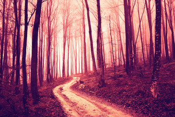 Wall Mural - Creepy violet red saturated forest with road. Color filter and vintage filter effect used.