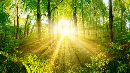 Foto auf Acrylglas Gelb Wald bei Sonnenuntergang