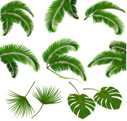 Fotobehang Palm boom Set of palm leaves isolated on white background. Vector illustra