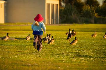 child chasing ducks