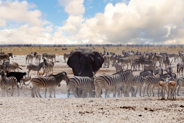 full waterhole with Elephants