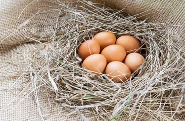 Brown eggs in hay