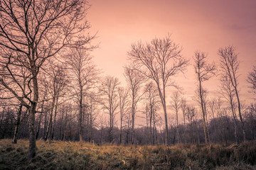 Forest at dawn in the autumn