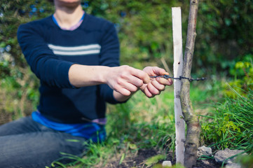 Young woman tying tree to stake