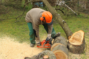 Baumfällarbeiten - Mann mit Schutzhelm und Schutzkleidung zersägt einen Baumstamm mit Motorsäge