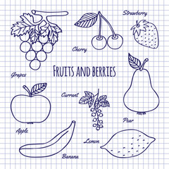 Hand draw fruits and berry