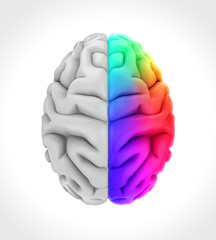 Left and Right Human Brain Anatomy Illustration. 3D render