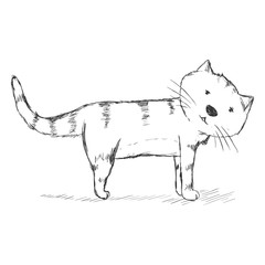 Vector Sketch Character - Funny Cat