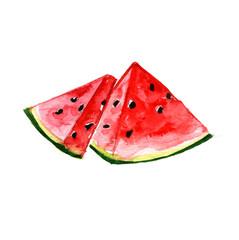 Watercolor insulated watermelon
