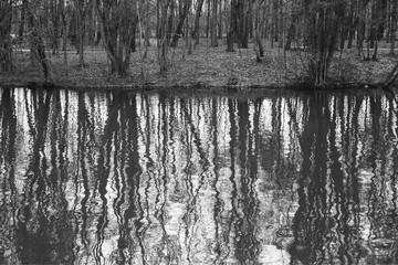 отражение стволов деревьев в воде