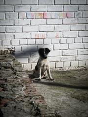 Little stray dog on the street