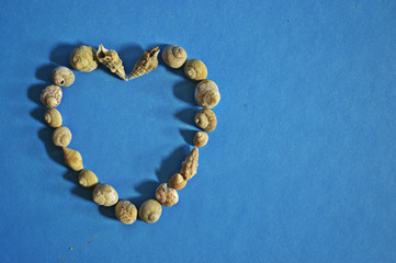 welcome summer, summer background, sea shells, heart, heart shape, heart-shaped shells, shells on a blue background,