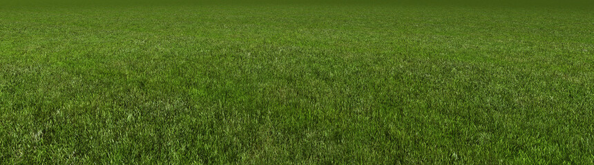 Wall Murals Green grass 3d rendering
