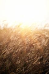 Grass, sun, and wind.