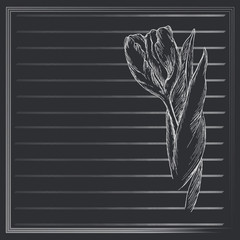 Graphic flower, sketch of tulip on black background. Vector floral illustration in vintage style. Hand drawn artwork. Template for wedding invitation, card, congratulation, greeting. Place for text.