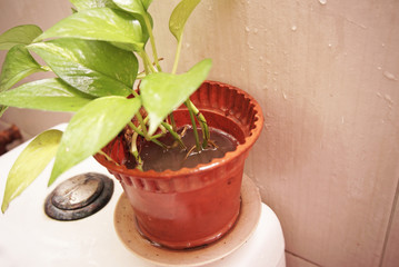 stagnant water in plastic pot vase, in a bathroom. potential breeding ground for mosquitoes.