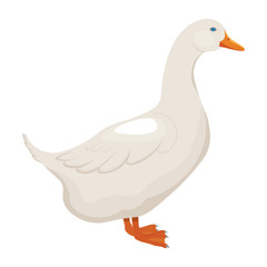 white duck vector illustration isolated on white background