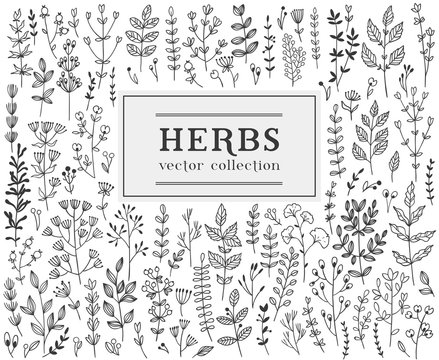 Herbs and twigss set. Vector illustration