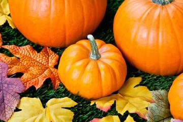 close-up view of halloween pumpkins.