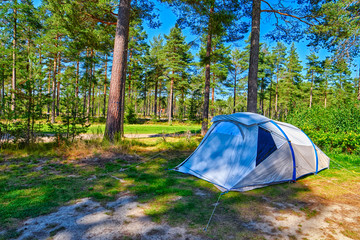 Pine forest Campsite Pitch
