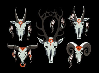 set of animal skull