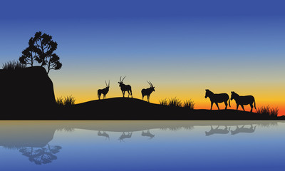 Antelope and zebra silhouette at morning