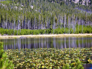 Reflections on lilypond in Yellowstone