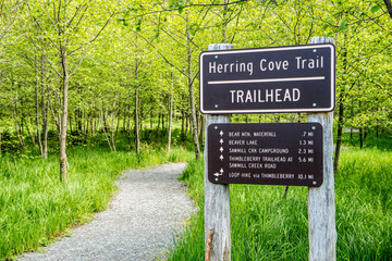Herring Cove Trail