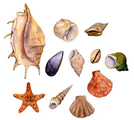 set of watercolor drawing shells