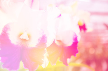 beautiful orchid flowers made with color filters