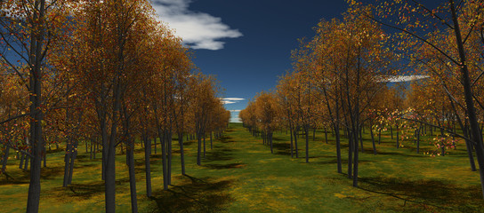 view of autumn trees lined up in rows. Blue sky with clouds and daytime