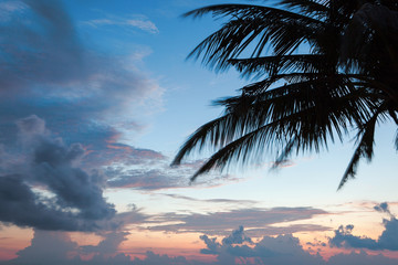 palm tree silhouette on sunset tropical beach