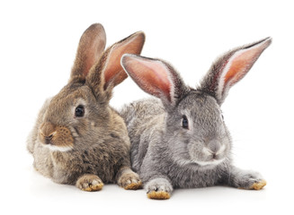 Baby rabbits.