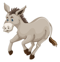 Donkey on white background