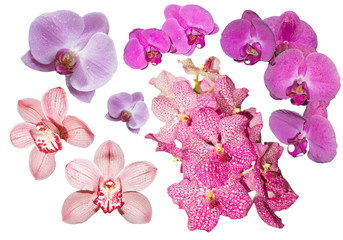 Collection of orchids isolated on white background