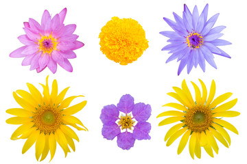 variety flowers isolated