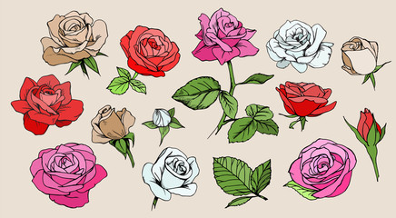 Set of colorful roses. Vector isolated elements