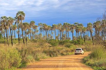 El Palmar National Park, Argentina