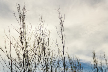 Leafless branches in the sky
