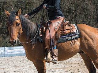 Tha horse with rodeo equipment