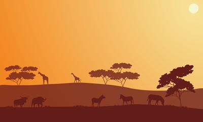 Silhouette of bison, zebra and giraffe