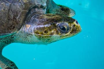 photo of beauty maldives islads, sea turtle