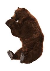 3D Rendering Ursus Brown Bear on White