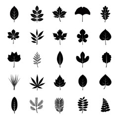 Leaves glyph vector icons