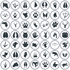 Set of forty nine animal icons