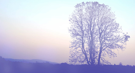SilhouetteTree and sky (vintage soft light style)
