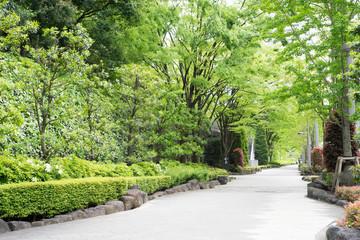 爽やかな緑の歩道
